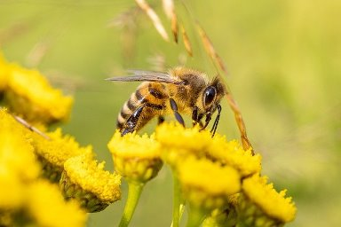 honey bee on a flower Image by Photorama from Pixabay