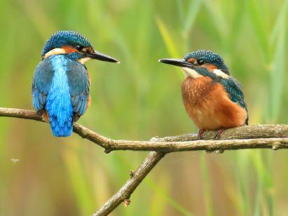 Credit: Jon Hawkins - Surrey Hills Photography