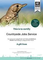 Certificate of song thrush sponsorship with Herts and Middlesex Wildlife Trust