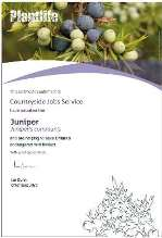 image of certificate for CJS adoption of juniper with Plantlife