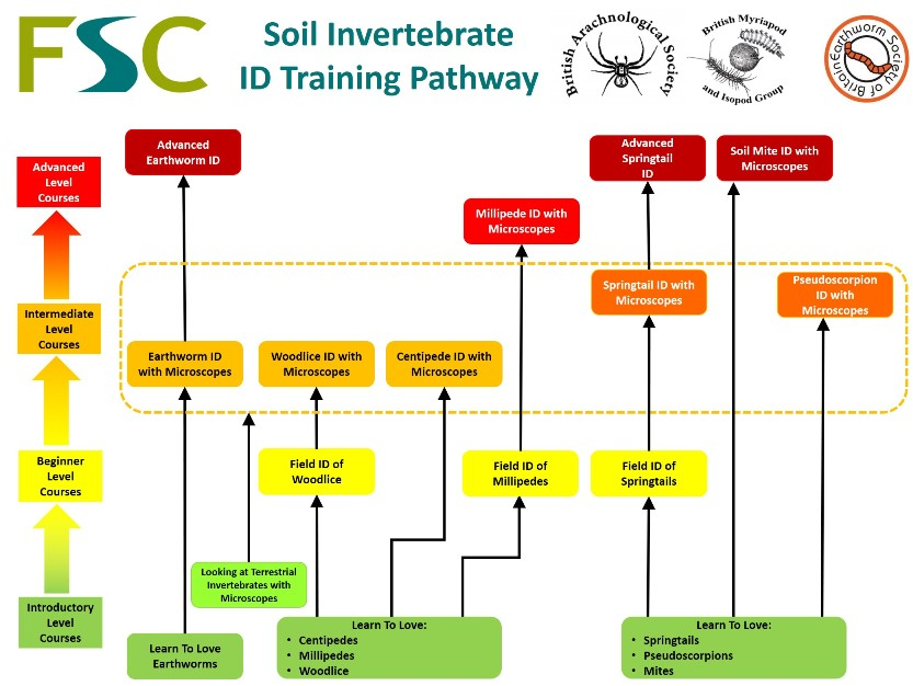 Soil Invertebrate ID Training Pathway (FSC)