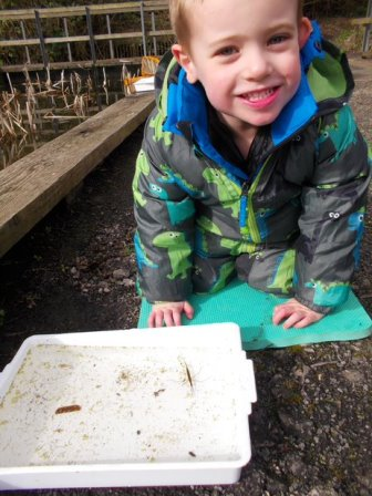 Swanwick Lakes Wildlife TOTS water stick insect found at pond dip session © Dawn Preston