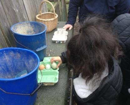 Collecting the hens' eggs on a Kenrick visit to Mount Pleasant School Farm. Photo Credit NAEE
