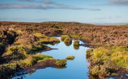 Peak District moorland (Moors for the Future Partnership)