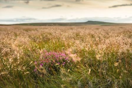 Peatland restoration work in Peak District National Park © Moors for the Future Partnership