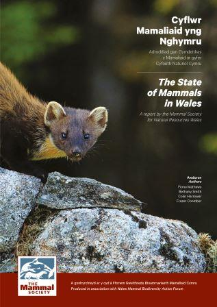 The State of Mammals in Wales report cover (The Mammal Society)