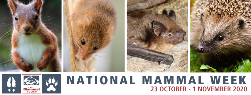 National Mammal Week promotion image showing red squirrel, mouse, bat and hedgehog