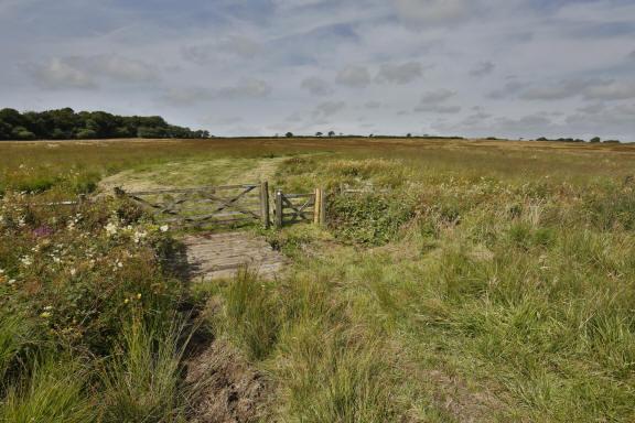 Greena Moor (image: David Chapman)