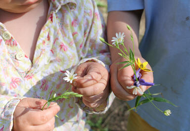 People have less contact with wild flowers than previous  generations Plantlife