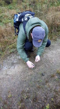 Collecting a possible pine marten  scat (Kevin O'Hara)