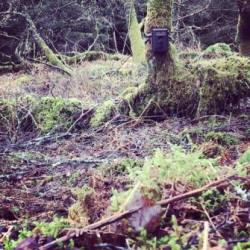 A remote camera set to film any passing  pine marten (Kevin O'Hara)