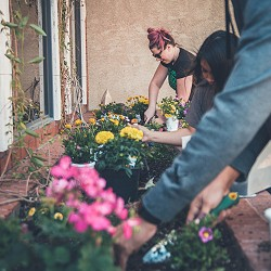 people planting up a window box (image: Neobrand on Unsplash)