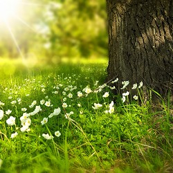 spring flowers next to a tree (image: Larisa Koshkina via Pixabay)