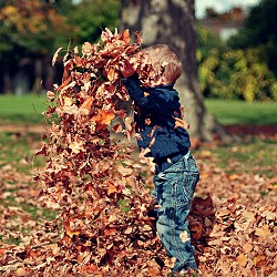 child playing in heap of brown autumn leaves (image: Scott Webb on unsplash)