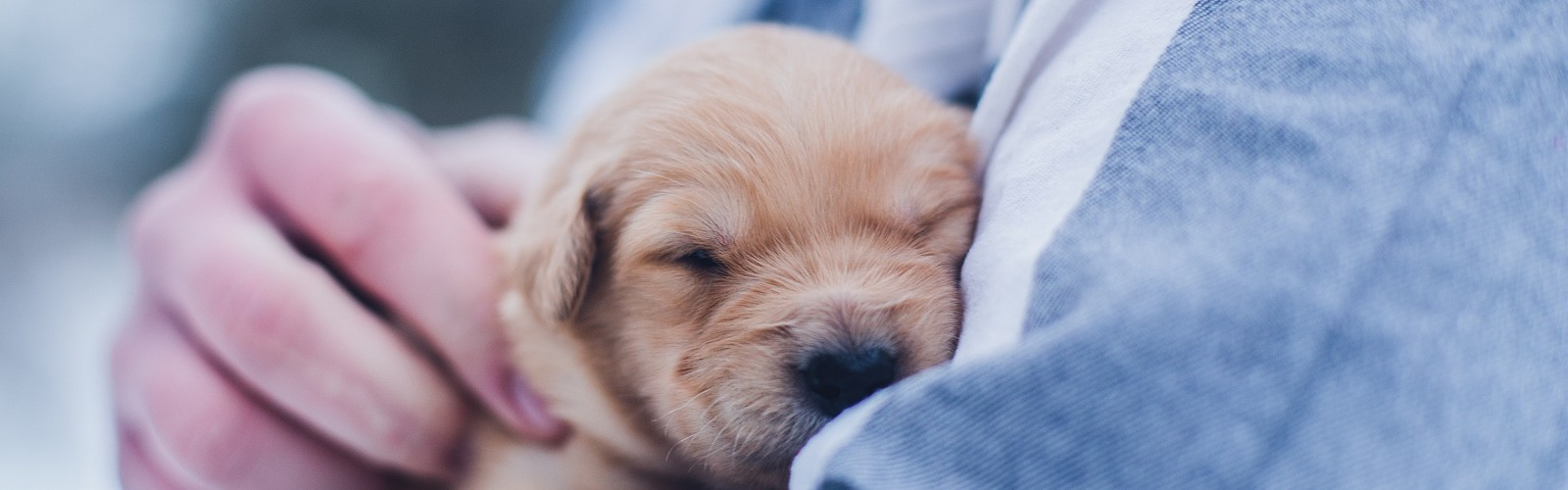 sleeping puppy cradled in arms (image: Lydia torrey on Unsplash)