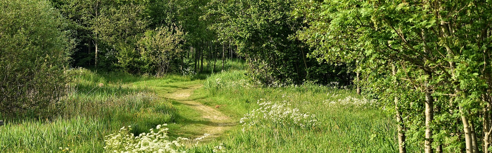 path winding through grassland bordered by woodland