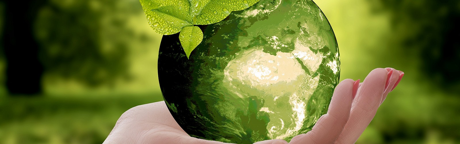 hand holding a green globe (pixabay)