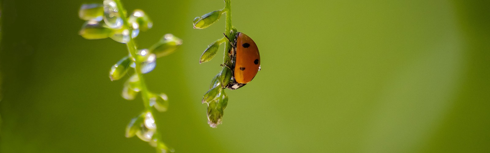 ladybird (image: Simon Smith / Unsplash)