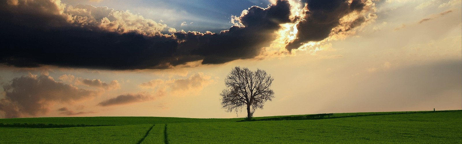 tree on horizon of green field (image: Digital Artist / pixabay)