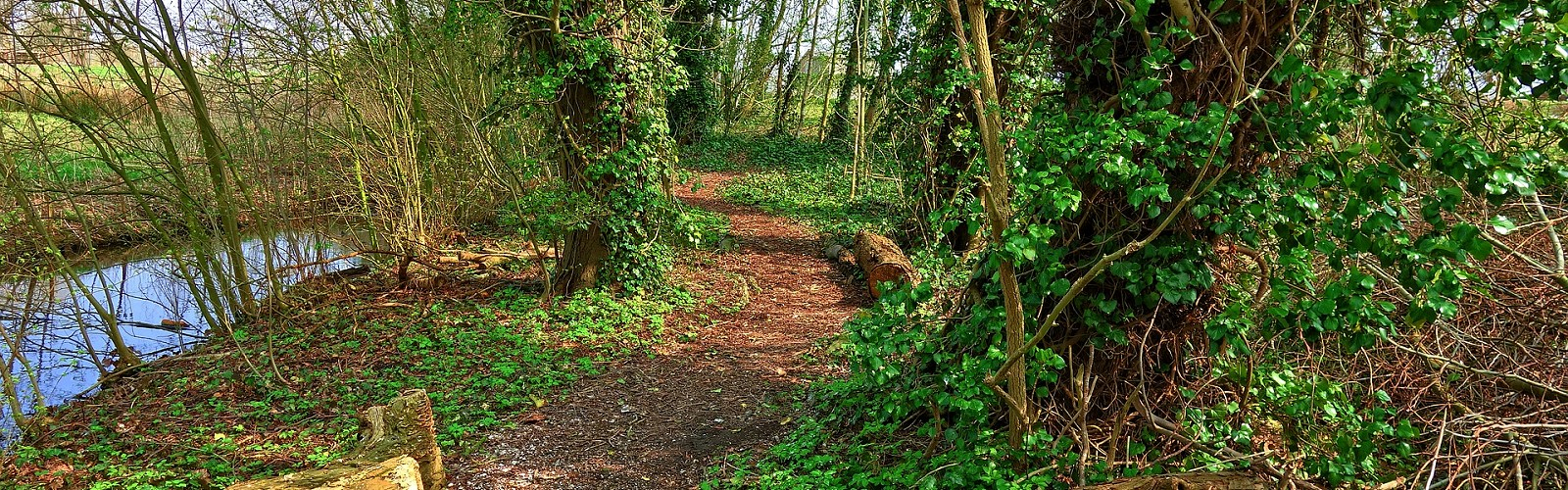 footpath through a open woodland (image: Mable Amber / pixabay)
