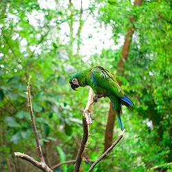 green macaw in the Ecuadorian rain forest (image: Ryk Porras on unsplash)