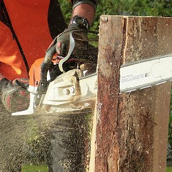 man using a chainsaw to cut logs (image: Petra Blume / Pixabay)