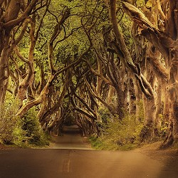 the dark hedges near Ballymoney (image: DarkWorksX / pixabay)