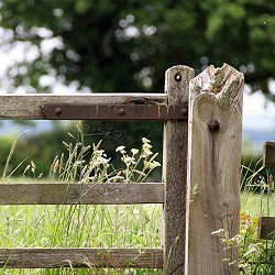 Field gate (image: Kenvsphotos / Pixabay)
