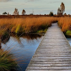 Section of boardwalk across wetands (image: Herbert / Pixabay)